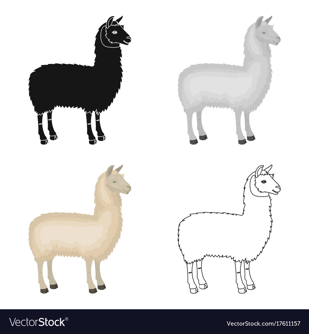 lama a south american pack animal a lame a vector image