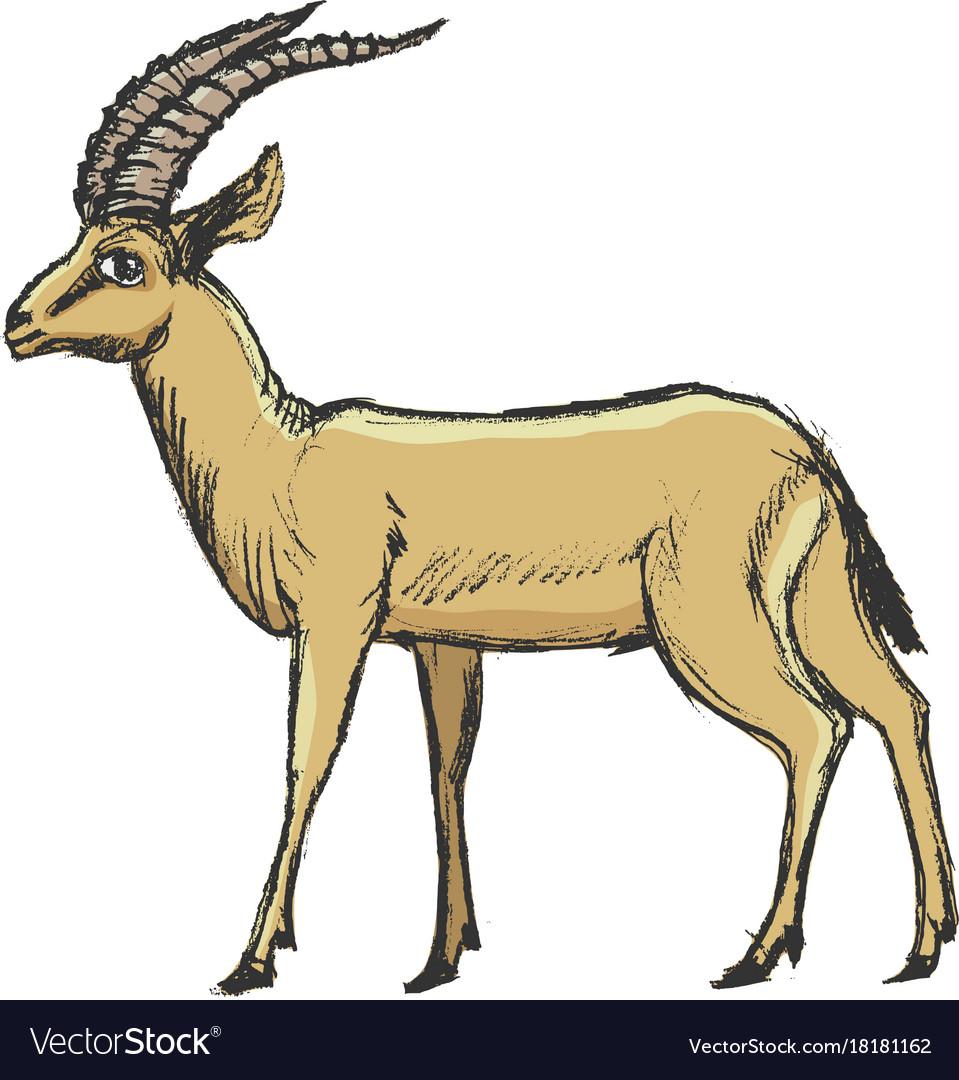 Antelope african animal