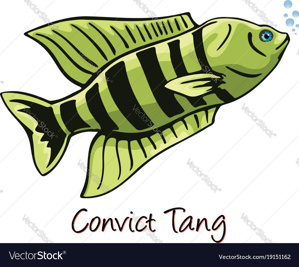 Convict tang color Royalty Free Vector Image - VectorStock