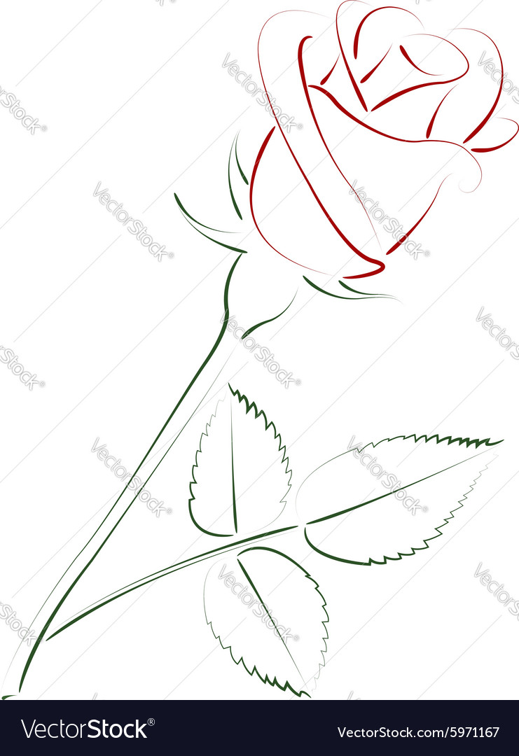 Beautiful sketched rose