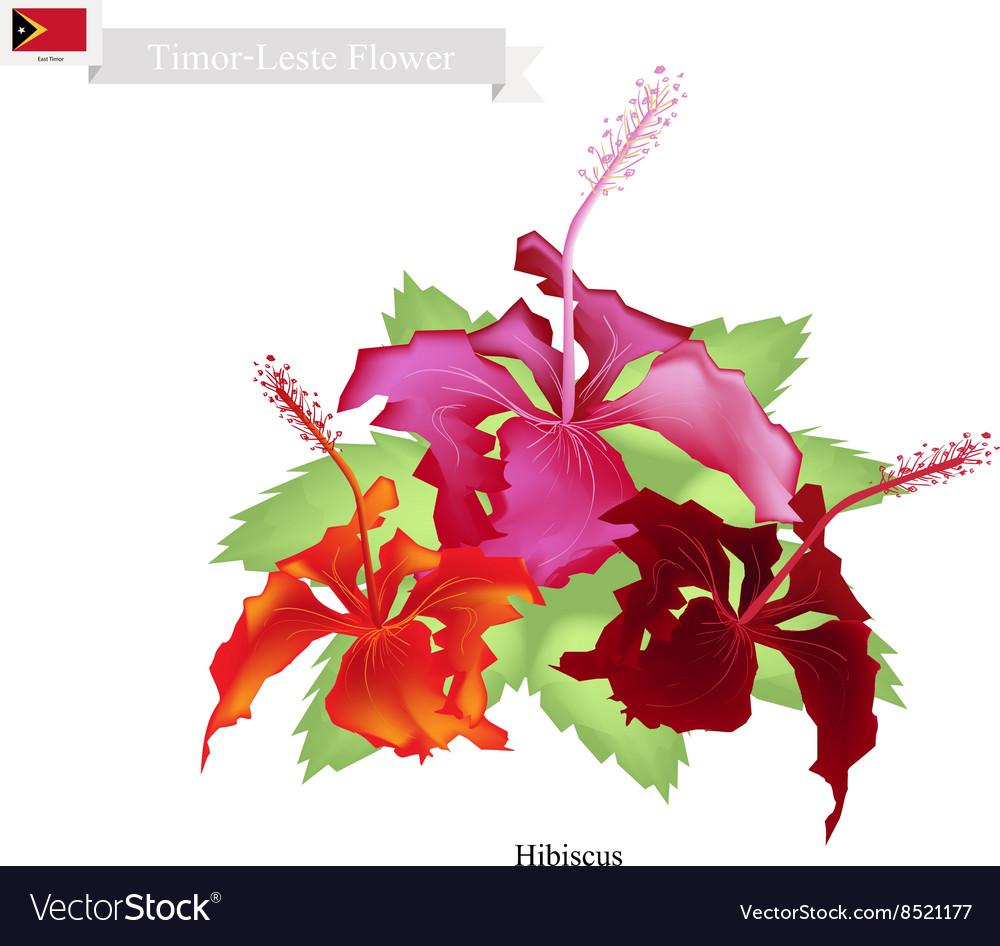 National flower of timor leste hibiscus flowers vector image izmirmasajfo