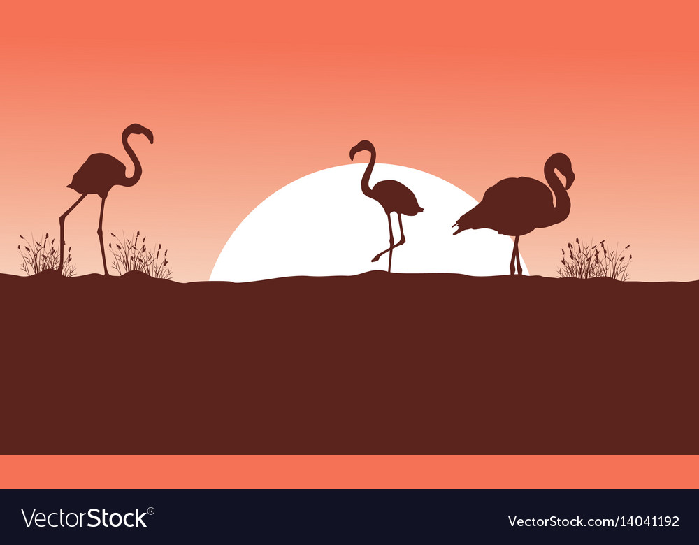 Flamingo at sunset scene silhouettes vector image