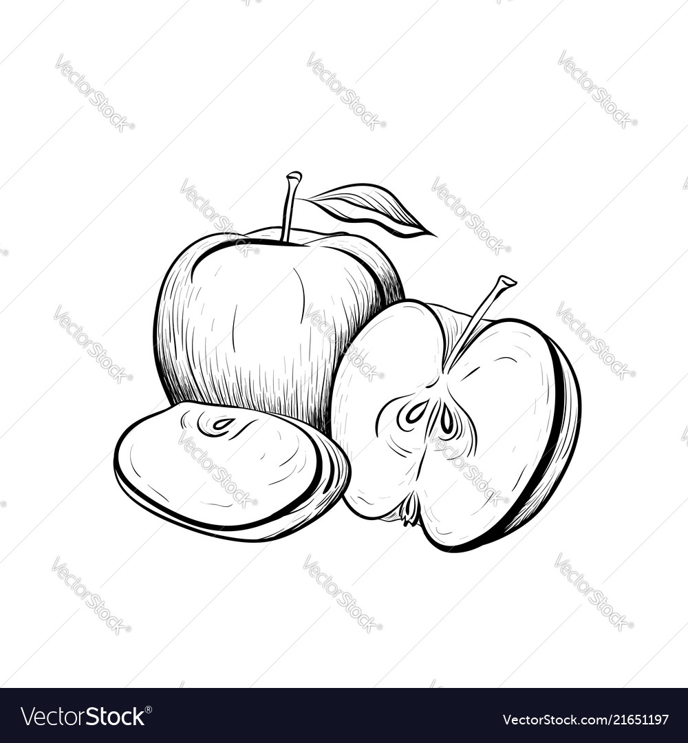 Black and white engraved of apples