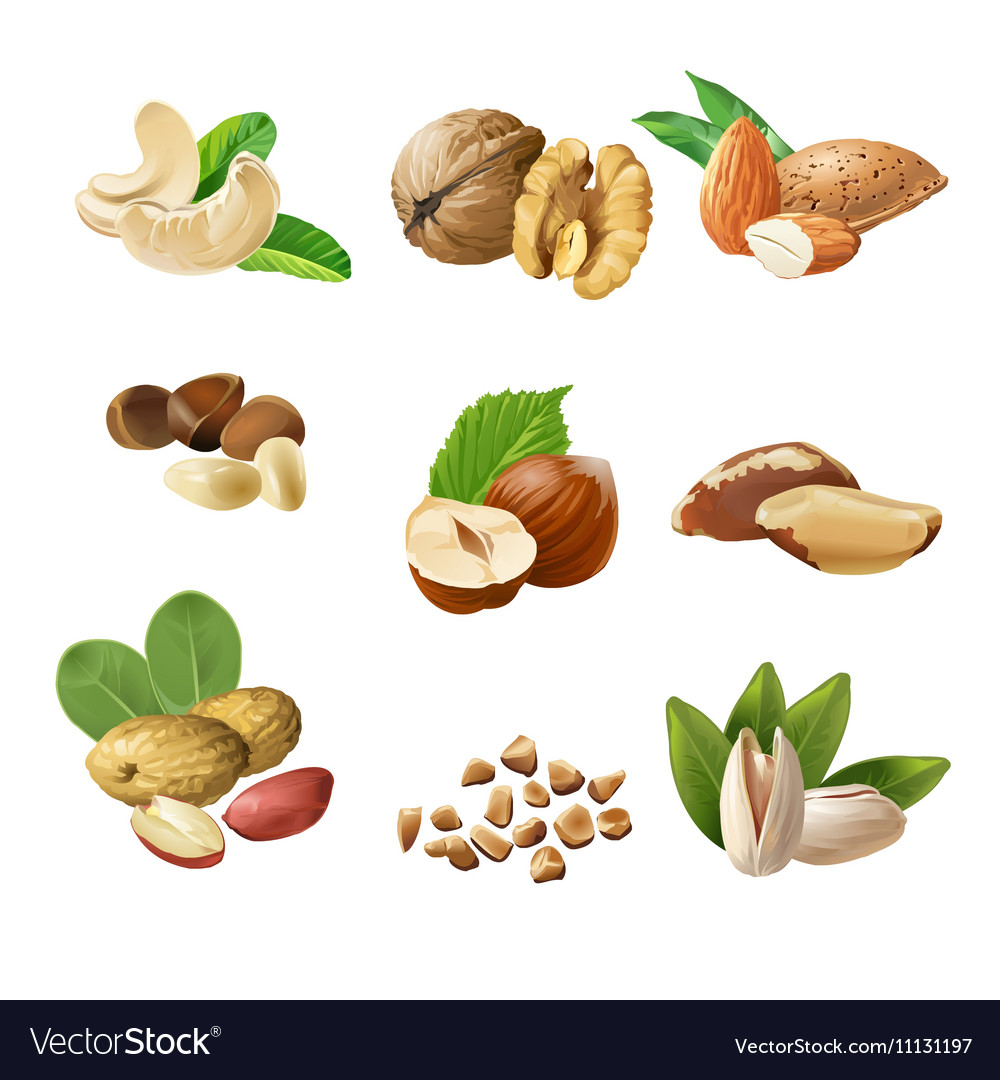 Set icons of nuts vector image