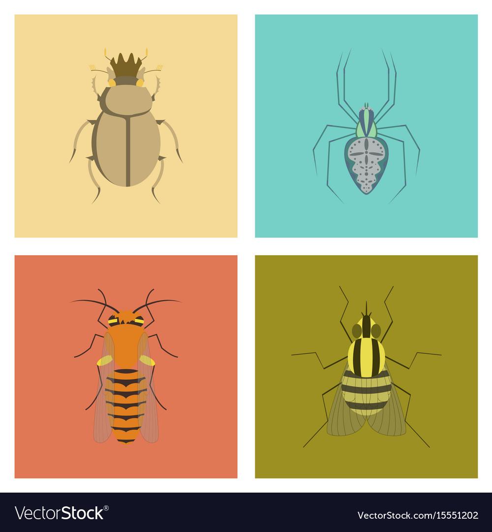Assembly flat bug scarab araneus bee