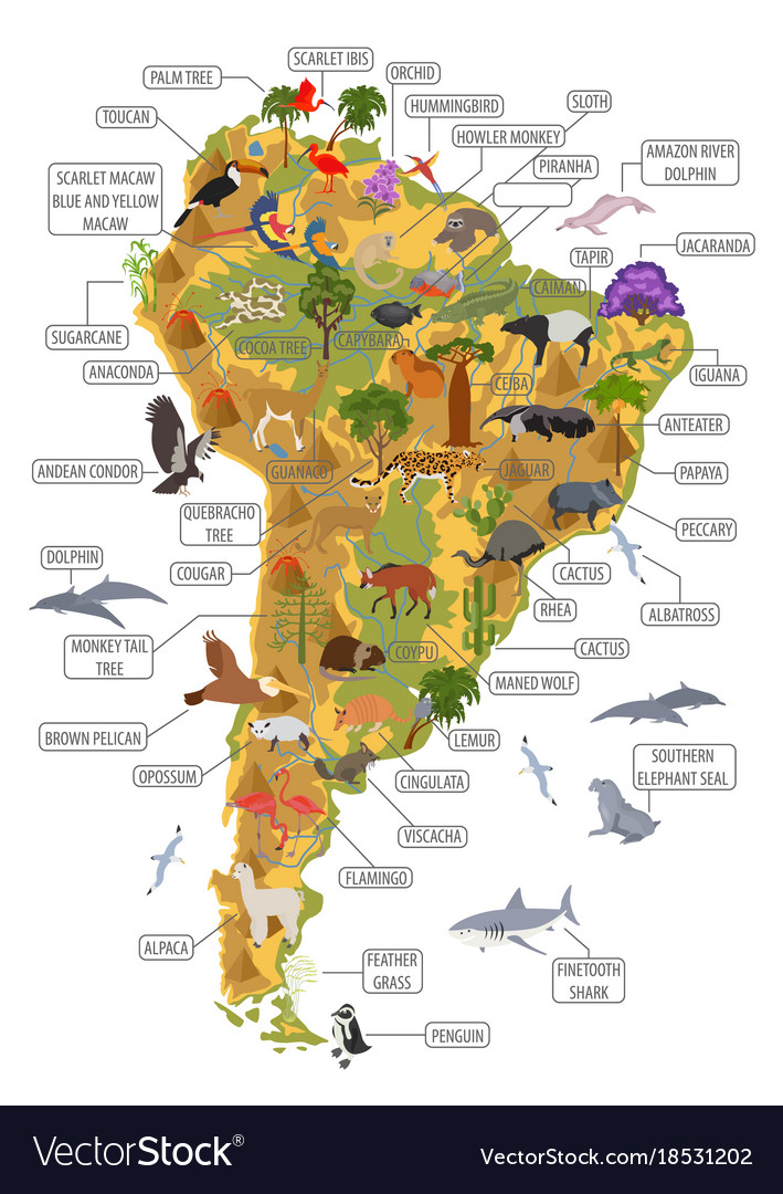 South america flora and fauna map flat elements on map making, map breakdown, typographic elements, map of baltimore and surrounding cities, map icons, map numbers, map symbols, map essentials, map people, map skills, map of maryland, body elements, map data, map scale, map tools, programming elements, user interface elements, miscellaneous elements, cartographic design, task elements, map key, map vintage, software elements, reference elements, map of speech, map pieces, map of arizona high schools, map of montana indian reservations, topic elements,