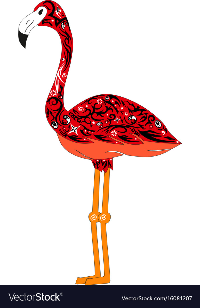 The image of a color flamingo a bird with