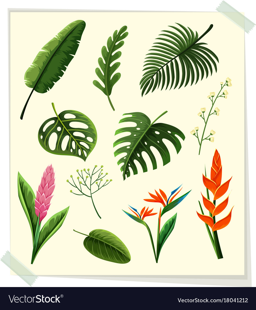 Different Kinds Of Leaves And Flowers On Paper Vector Image