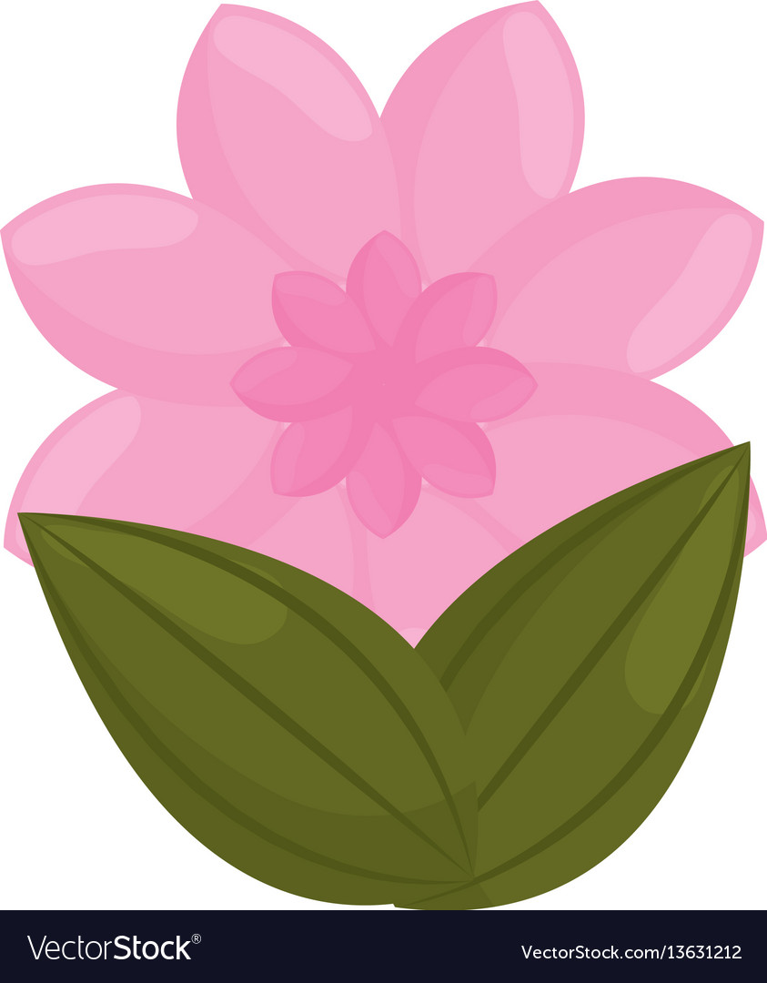 Pink flower garden bud with leaves