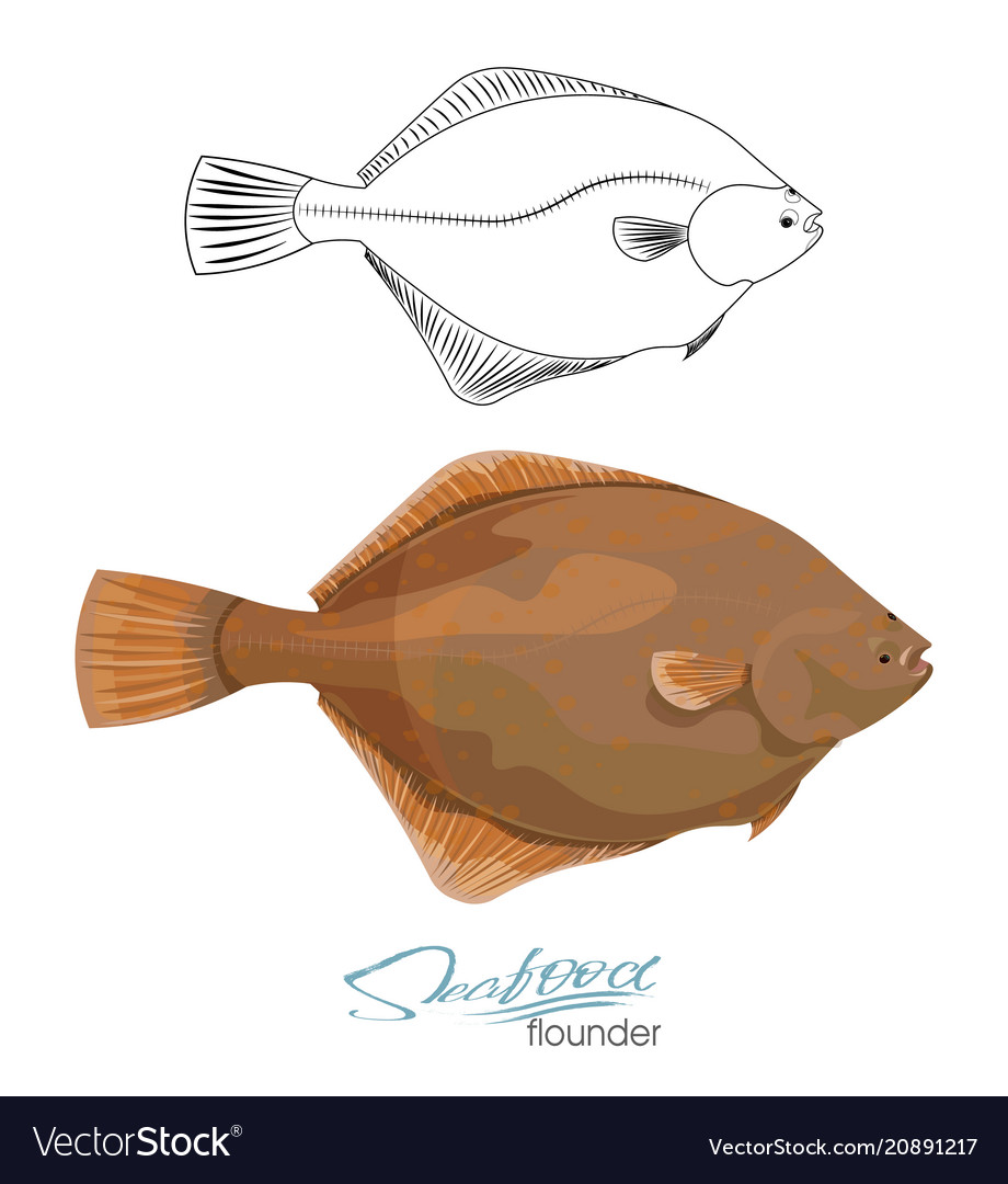 Olive Flounder Sea Fish Royalty Free Vector Image This easy flounder recipe uses a little bit of bread crumbs, but mostly parmesan, and we couldn't be happier with the results. vectorstock