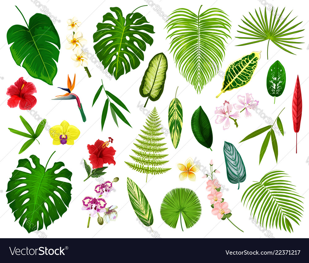 Tropical exotic plants and flowers leaf