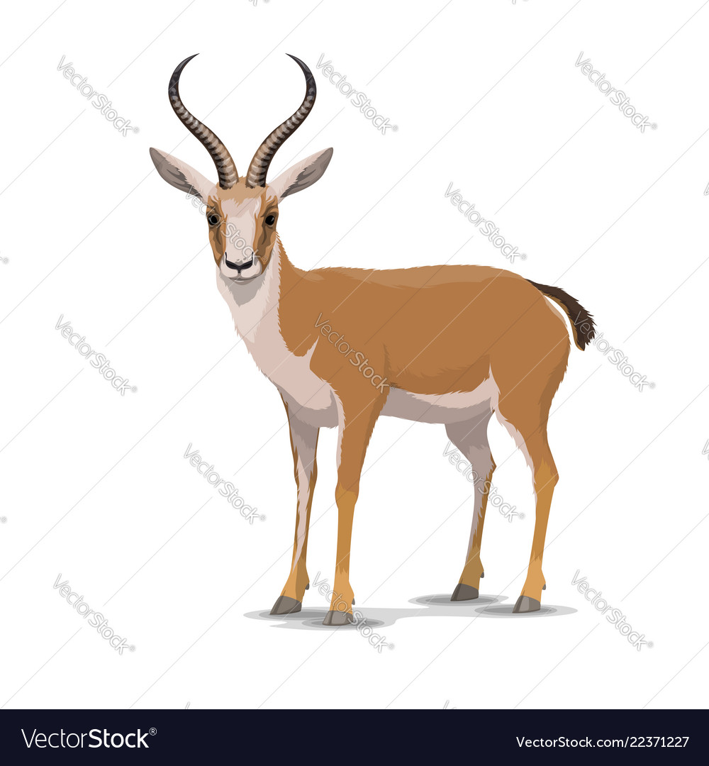 Cartoon goitered gazelle animal