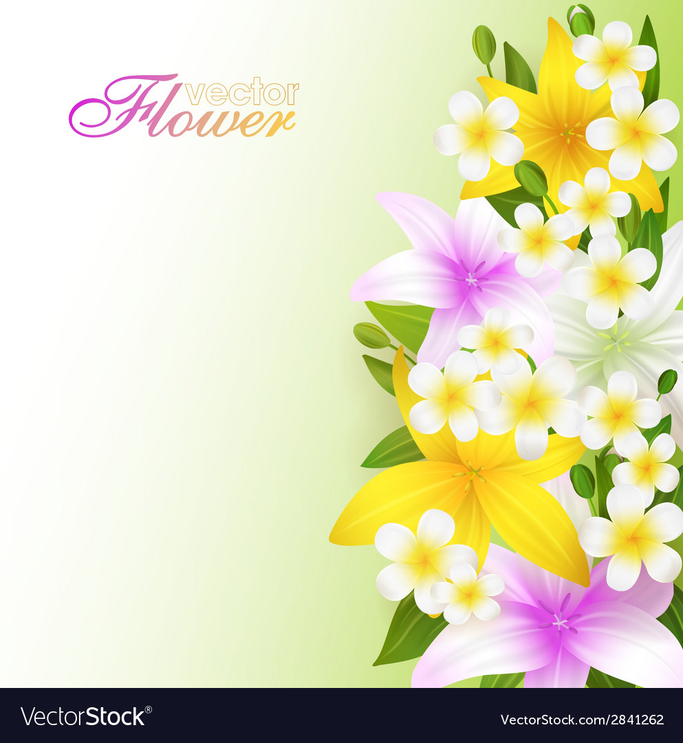 Beautiful Flowers Background Royalty Free Vector Image