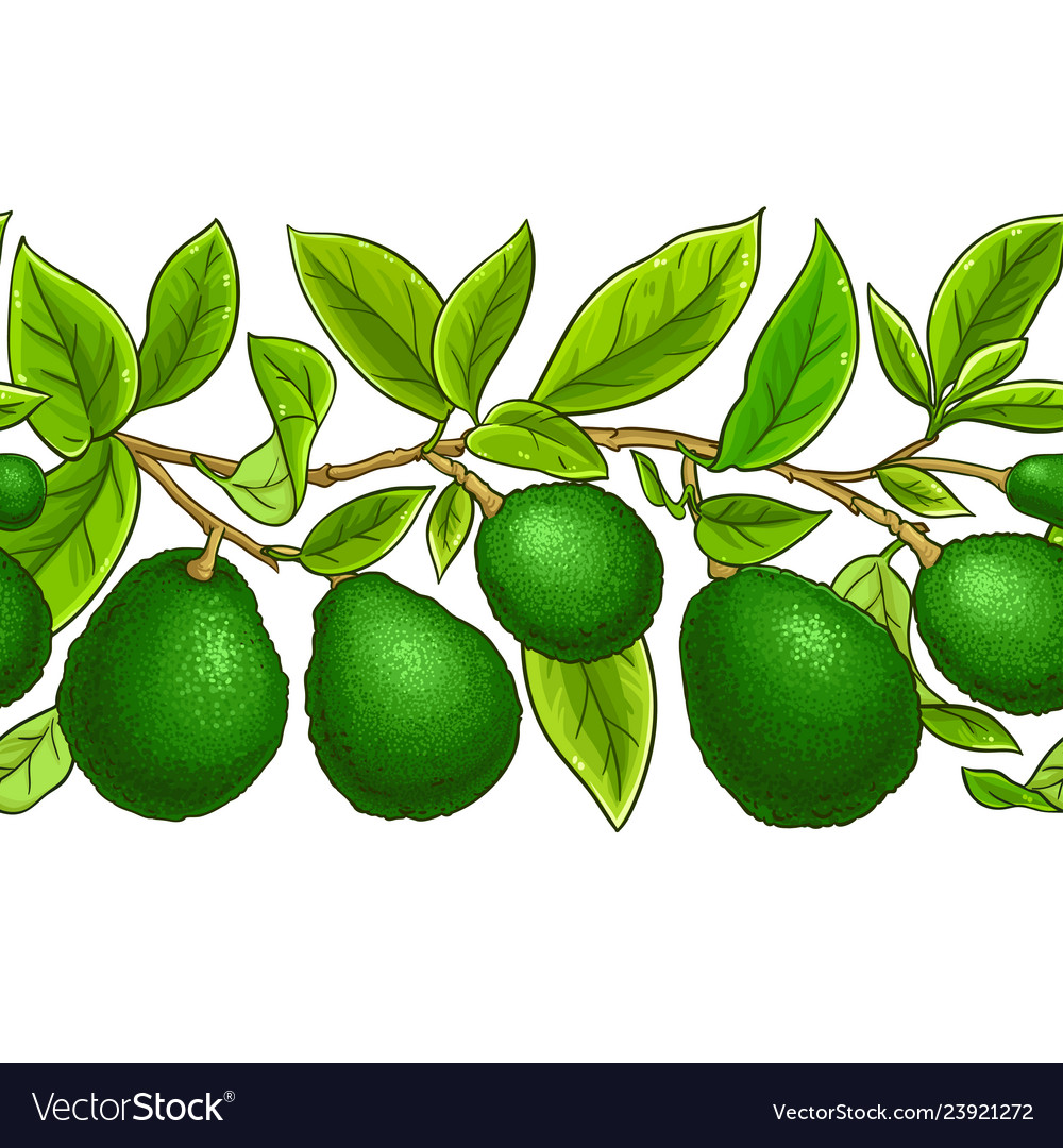 Avocado branches pattern