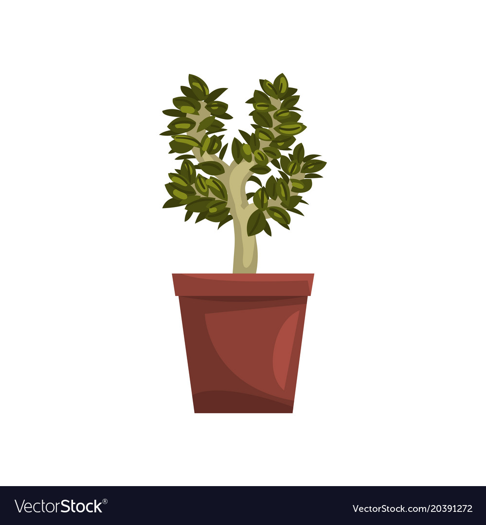 Bonsai tree indoor house plant in brown pot Vector Image