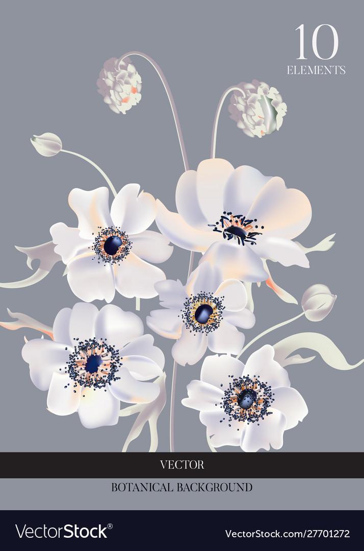 Wedding anemone white flowers tender soft bloom