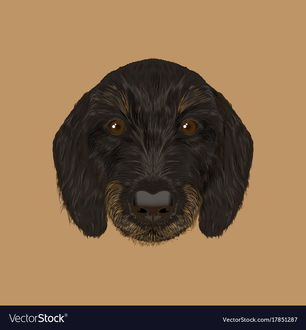 Cute black curly face of domestic puppy on yellow