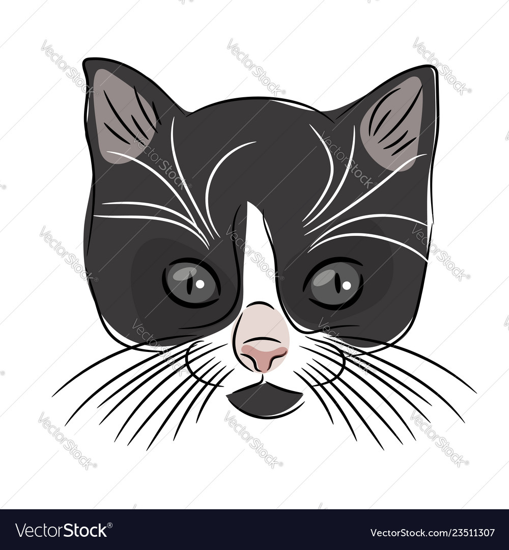 Face of a cute kitten hand-drawn cat on a white