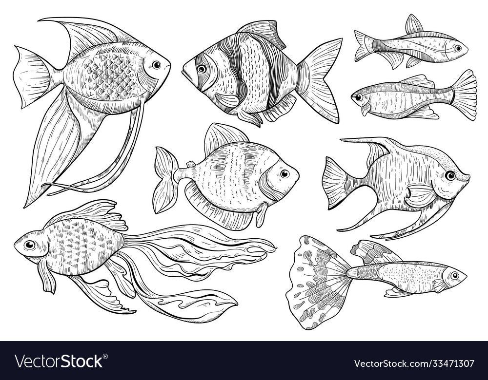 Freshwater and ocean fish animal sketch on white