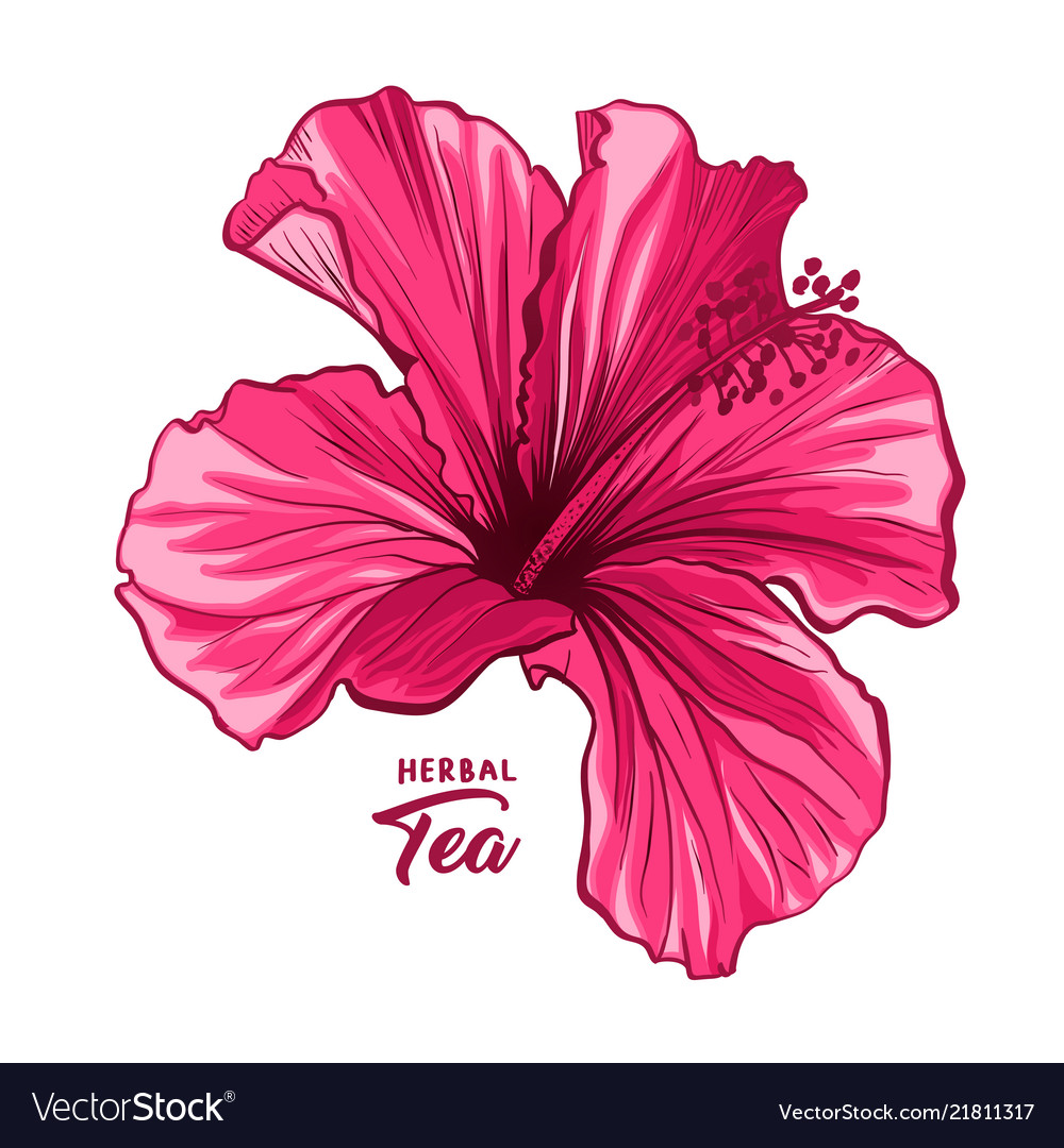 Hawaiian Hibiscus Fragrance Flower Or Mallow Pink Vector Image