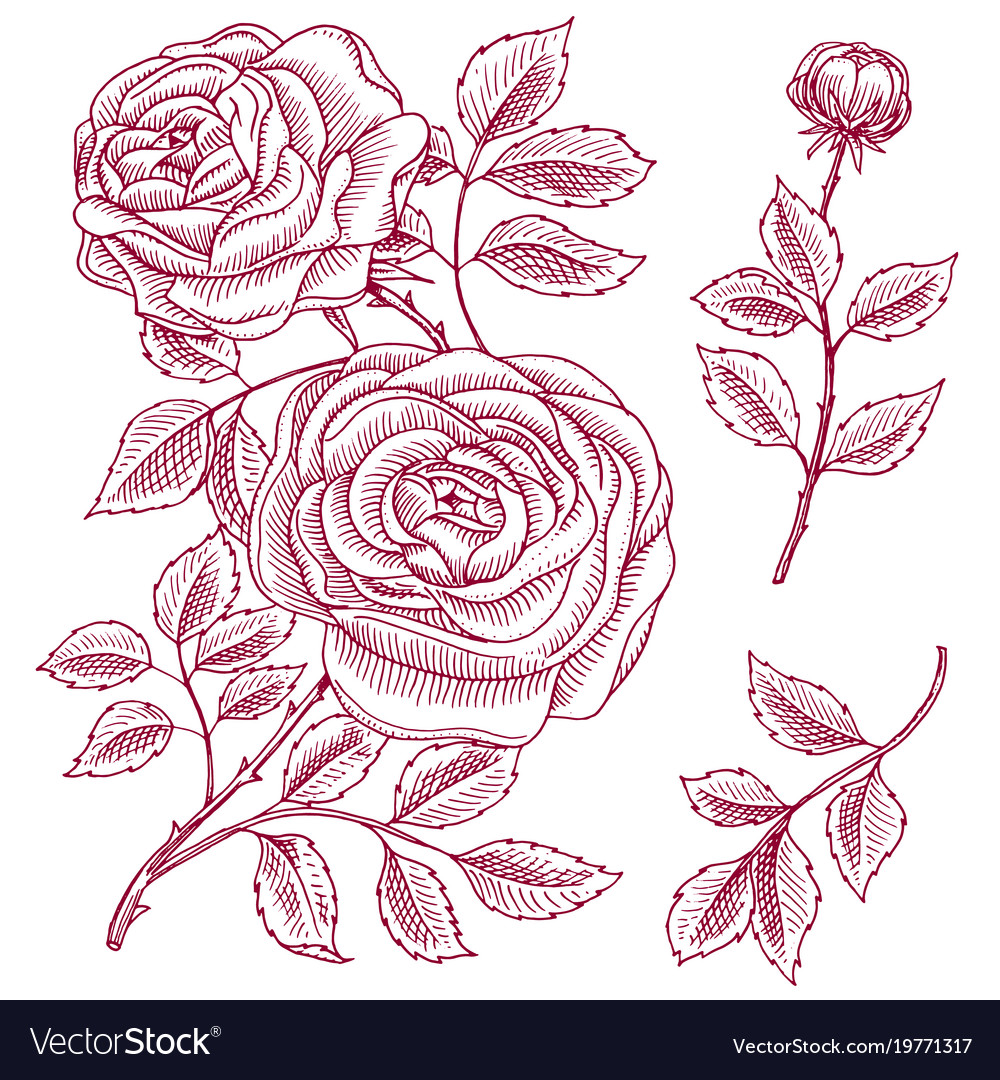 Roses with leaves and buds wedding botanical