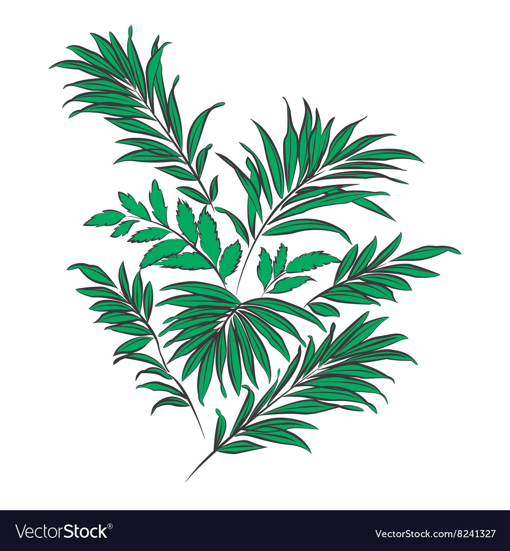 Palm Leaves Doodle Style Royalty Free Vector Image Works as a background where you can add images or text. vectorstock