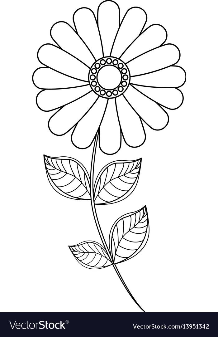 Flower daisy floral decoration line