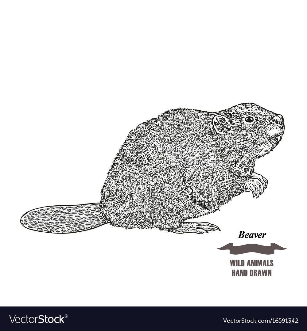 Forest animal beaver hand drawn black ink sketch