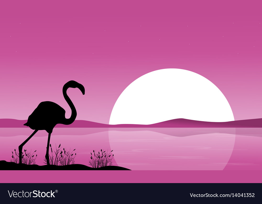 Collection flamingo scenery at sunset vector image