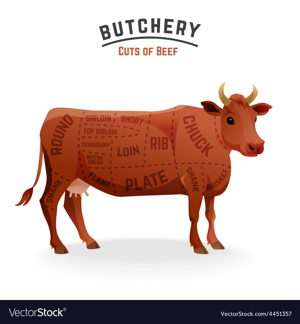 Beef Cuts Diagram | Beef Cuts Diagram Royalty Free Vector Image Vectorstock