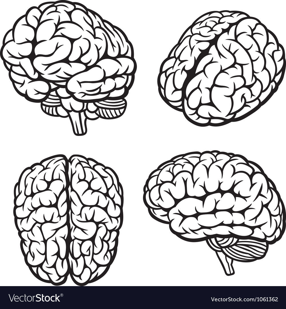 human brain royalty free vector image vectorstock rh vectorstock com brain factory brain vector free