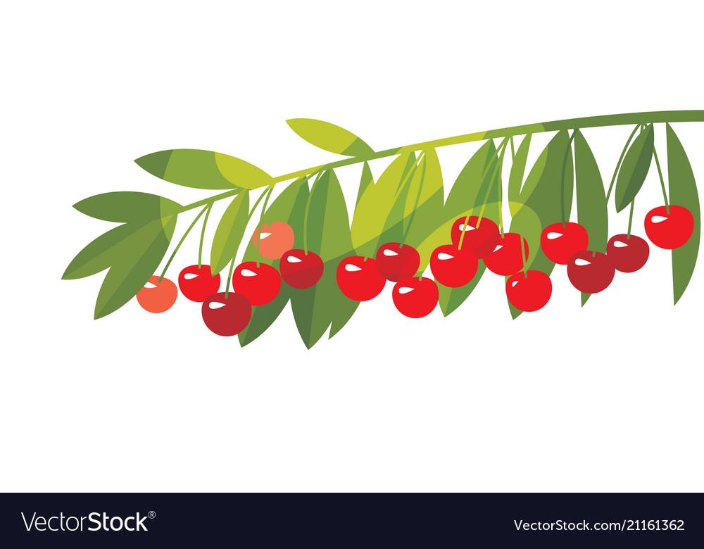 Rape cherry fruit simple flat design element