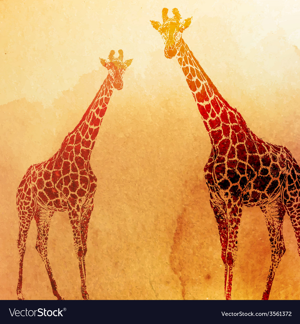Vintage of watercolor giraffes on the old p