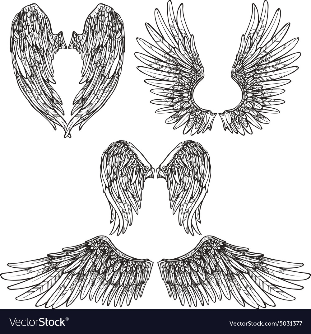 wings sketch set royalty free vector image vectorstock