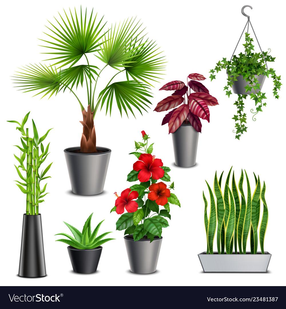 House plants realistic set