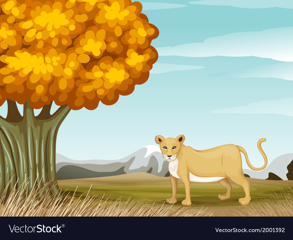 A cheetah near the big tree vector image