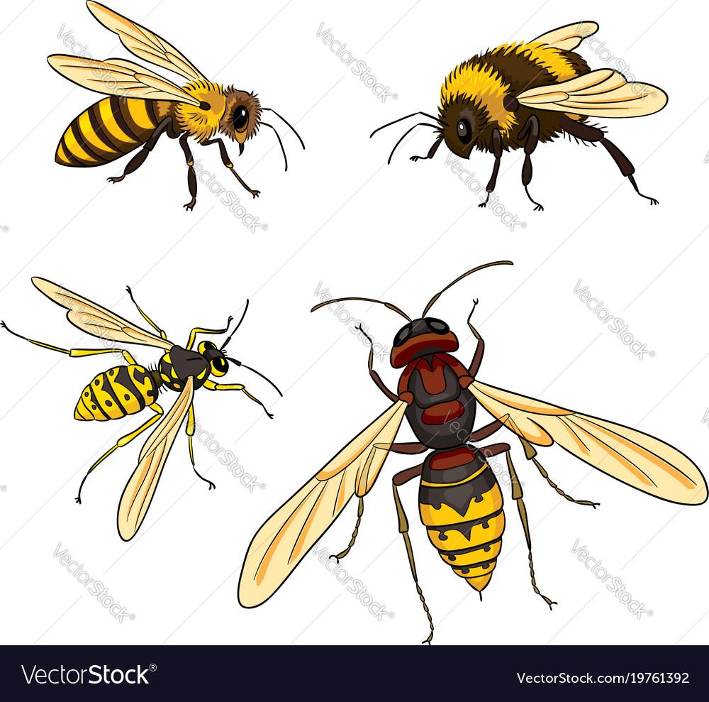 Bee wasp bumblebee hornet
