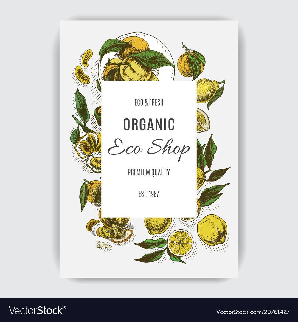 Colorful citrus card iilustration with