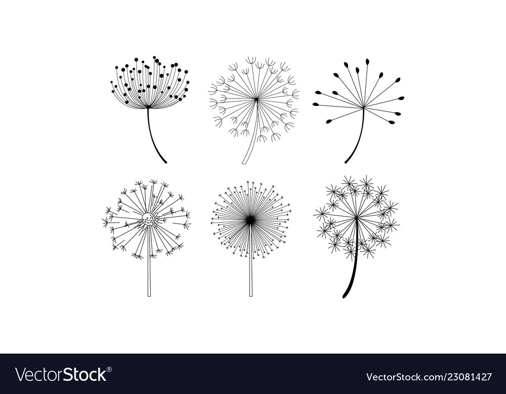 Set of dandelion flowers with fluffy seeds