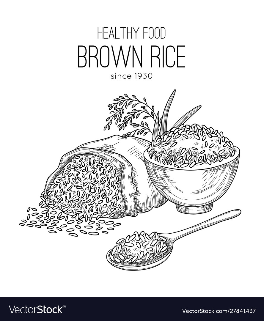 Rice hand drawn agricultural background with