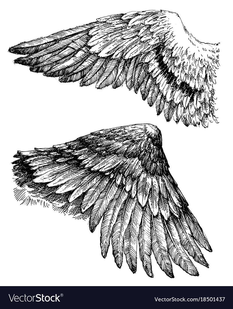 Wings drawing