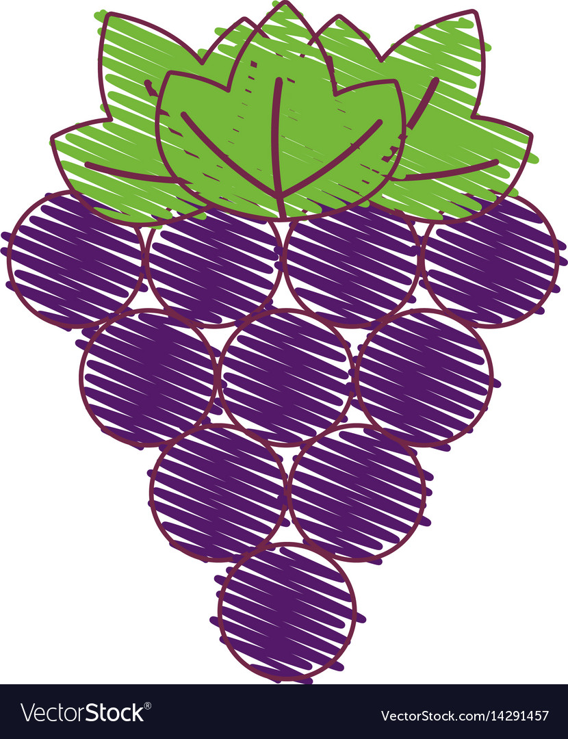 Purple grapes fruit icon image