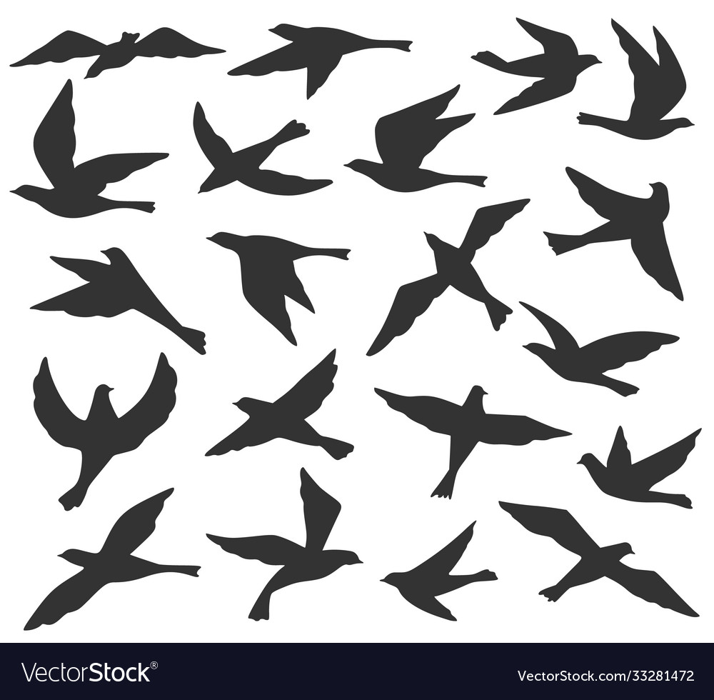 Bird silhouettes flying birds flock animal