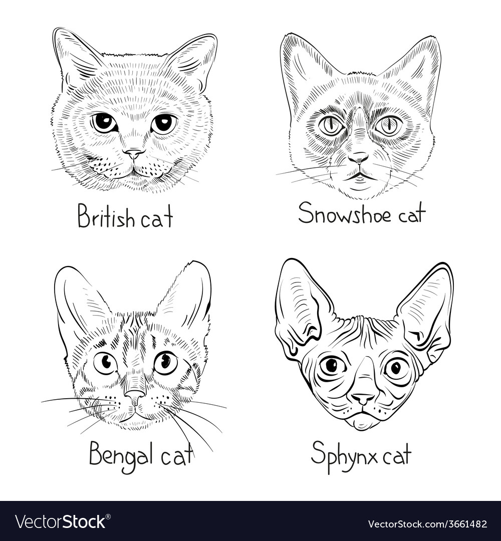Drawing Cats Icons Royalty Free Vector Image Vectorstock