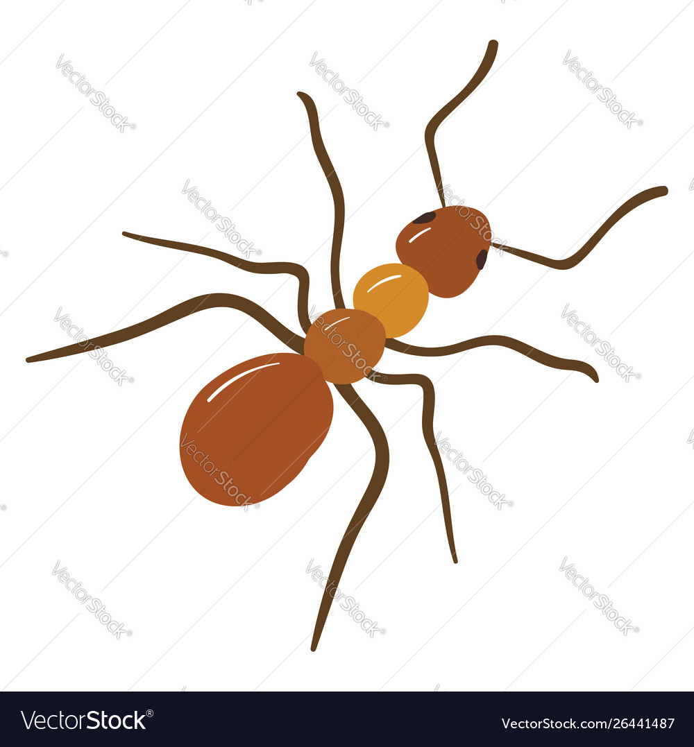 Brown ant on white background