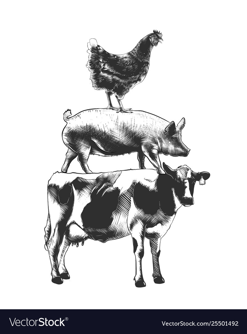 Engraved style farm animals collection