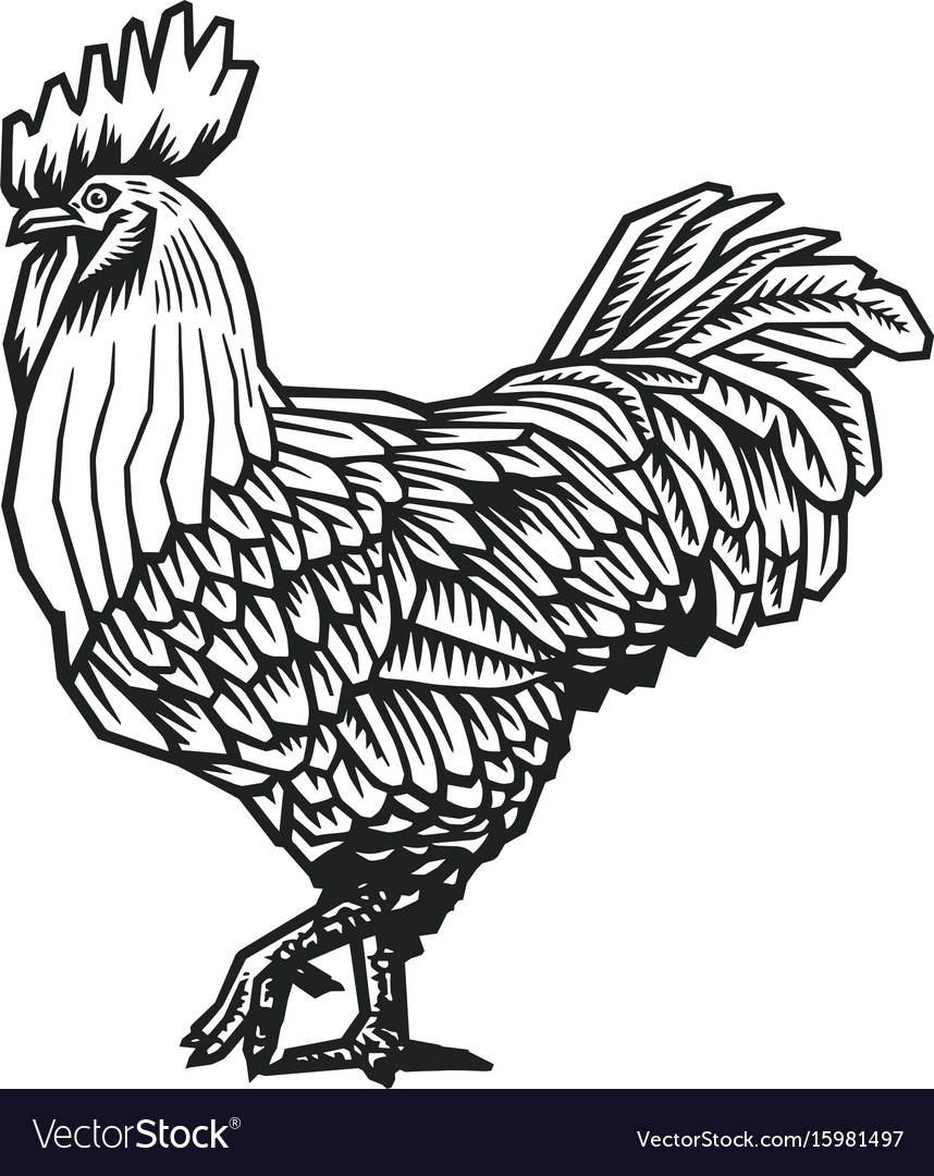 Rooster or cock hand drawn in medieval engraving vector image
