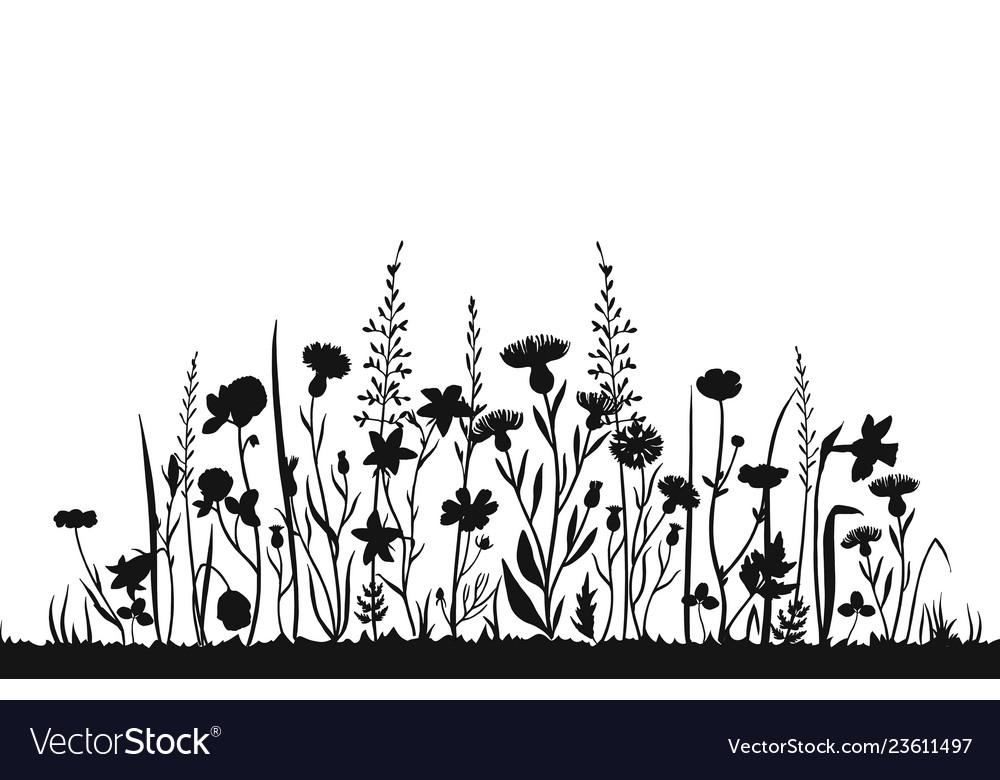 Wildflower silhouettes wild grass spring field
