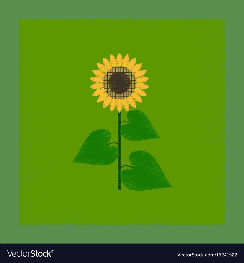 bright sunflower icon flat style