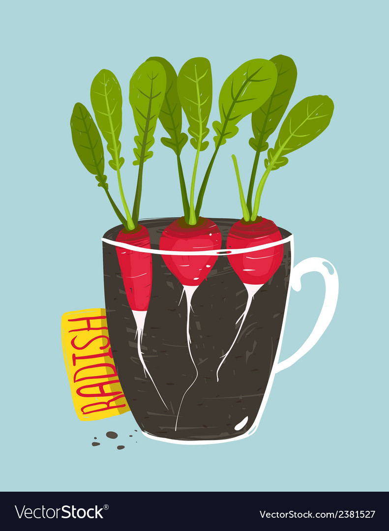 Growing Radish with Green Leafy Top in Pot